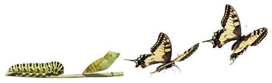 transformatie karen martin vlinder ontpoppen.jpg